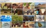 Wielkie zgromadzenie s³oni  / The Great Elephant Gathering (2011) PL.1080i.HDTV.x264 / Lektor PL