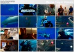 �ar�acz ludojad - bez klatki / Great White Shark: Uncaged (2008) PL.TVRip.XviD / Lektor PL